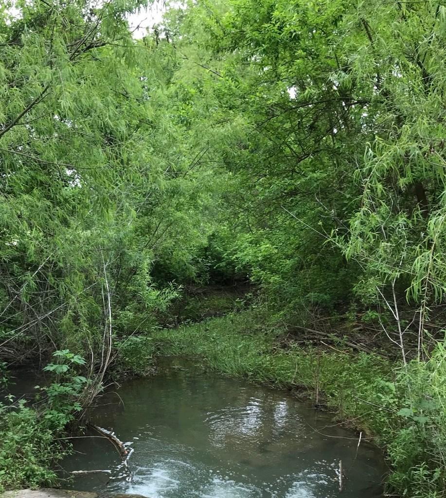 Vizcaya in Round Rock, view of McNutt Creek
