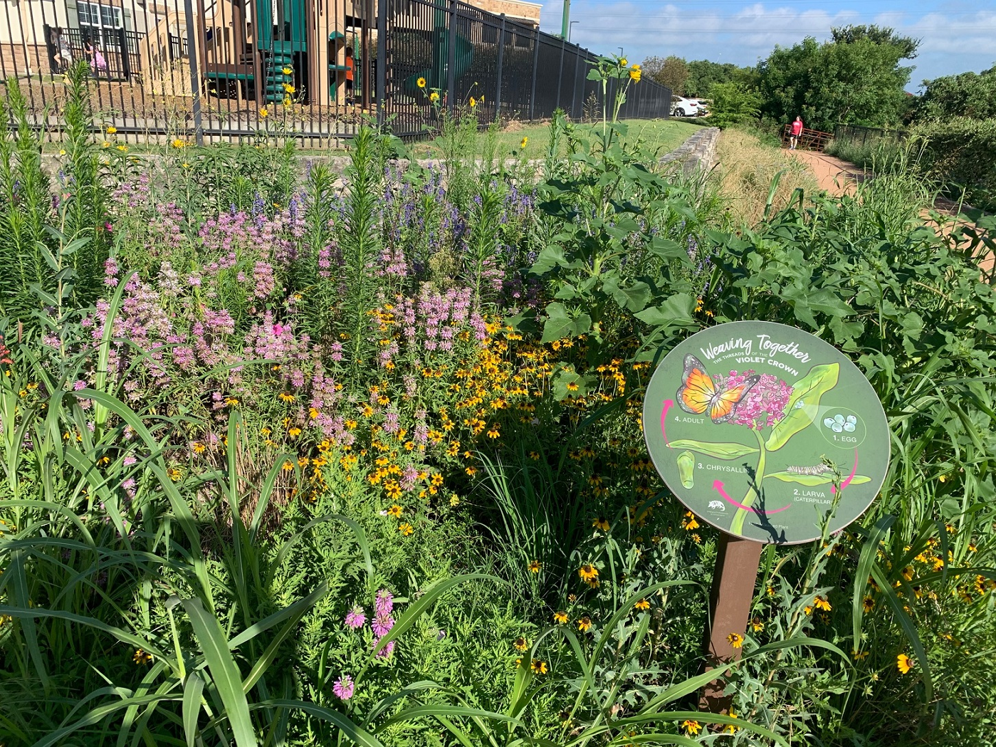 Violet Crown Trail in Austin