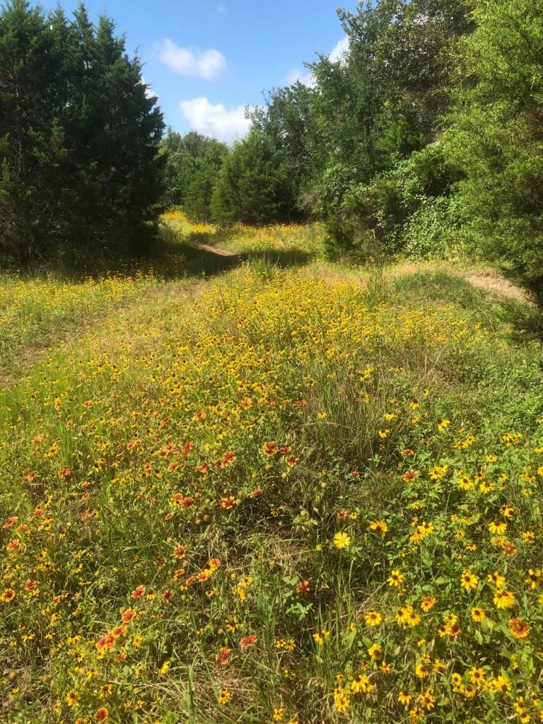 Field of wildflowers on Violet Crown Trail