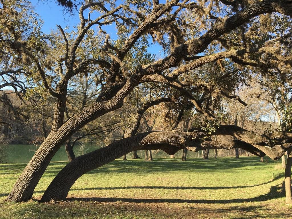 Ingram_2021_Tree