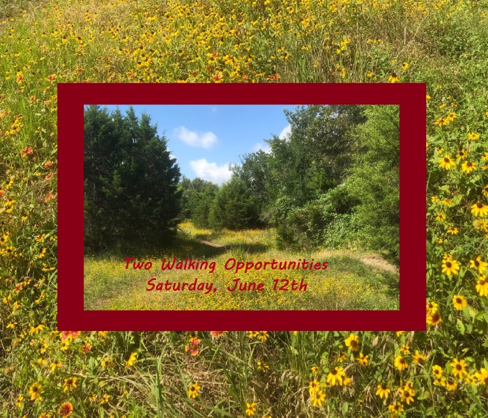Two Walking Opportunities on June 12th