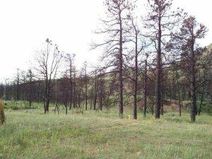 Colorado Springs Rural Milling