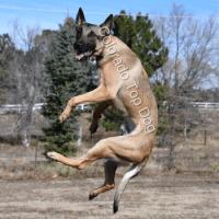 Parker Dog Training