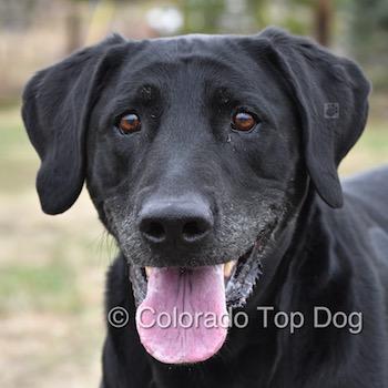 Dog Training Information Overload?