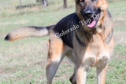 Colorado's Top Dog Training