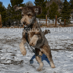Dog Training Colorado
