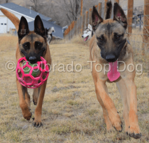 Denver Dog Training