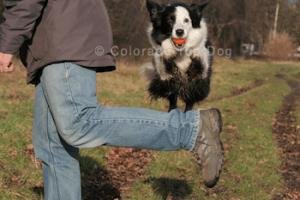 Colorado Dog Training