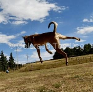 Castle Rock Dog Training
