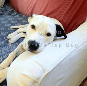 Denver Dog Training
