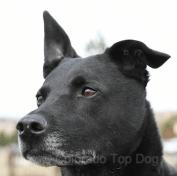 Colorado Top Dog