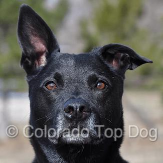 Rescue Dog Lucas