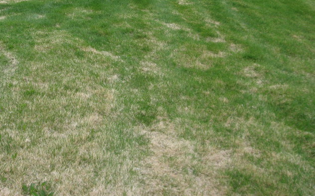 In Colorado, Should You Fertilize Your Lawn in March?