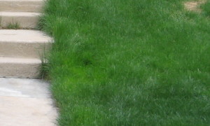 Yellow Patches In Lawn