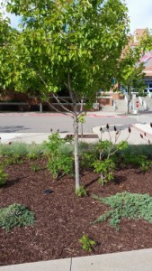Tree in Planting bed