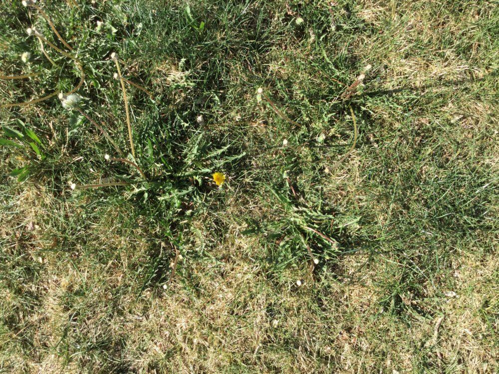 Revive Lawn 2