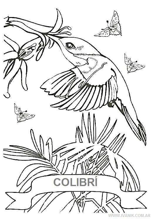 Hermosos Colibres Para Imprimir Y Pintar Colorear Imgenes