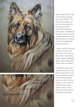 Long Haired German Shepherd Tutorial Page 12