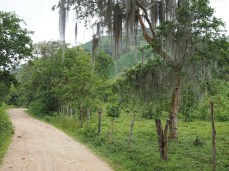 Bäume mit Flechten