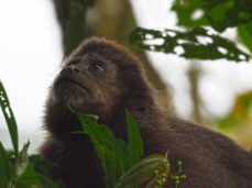Auf der brasilianischen Seite gibt's Affen zu sehen