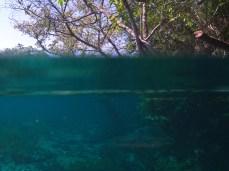 Pflanzen über und unter Wasser