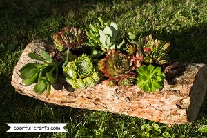 DIY: How to make a wood log planter with succulents