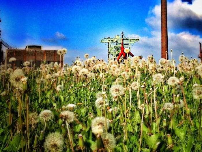Blumenwiese vor Henrichshütte