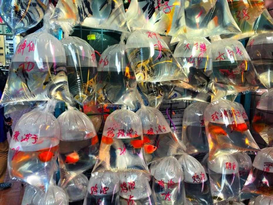 Goldfische in Tüten am Goldfischmarkt
