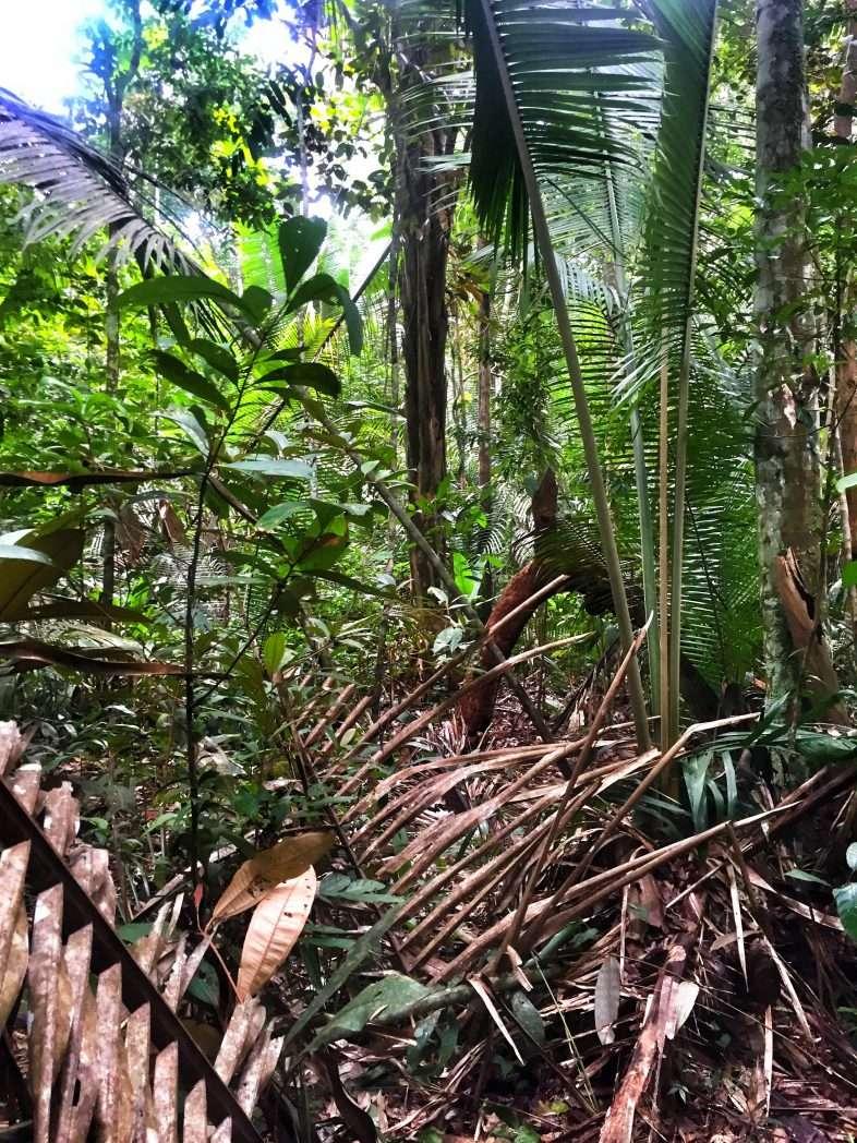 Der Urwald ist ein fast undurchdringlicher Dickicht