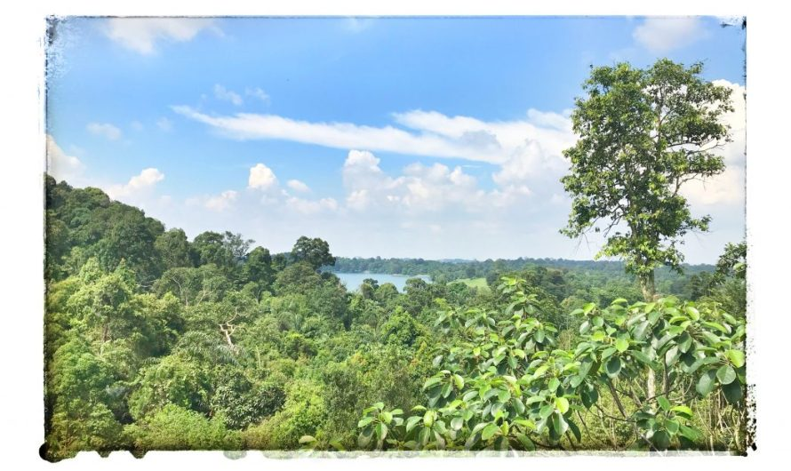 Tree Top Walk – Urwald in Singapur