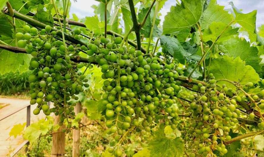 Wein aus Dortmund