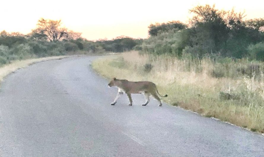 Der Hwange Nationalpark in Simbabwe