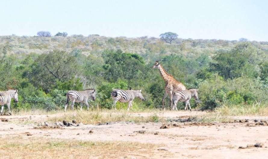 Unterwegs im Krüger-Nationalpark