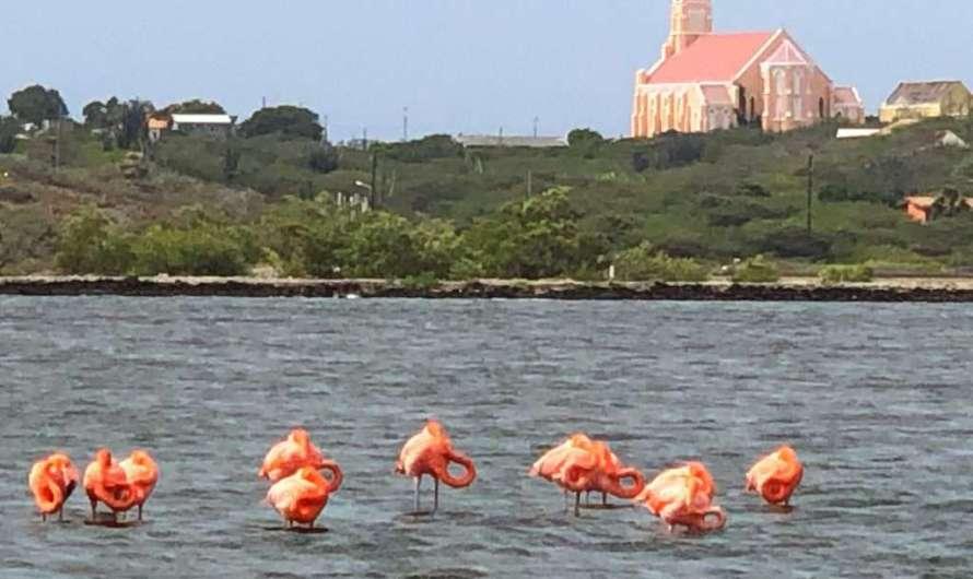 Flamingos auf Curaçao