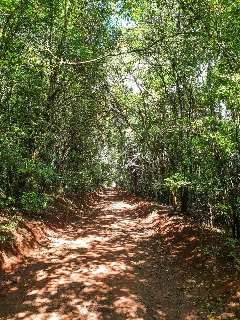 Karura Forest Nairobi Kenya