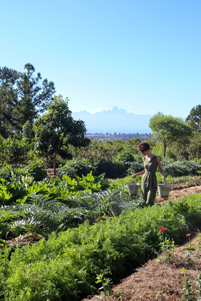 Organic Farming Vegetable Mount Kenya