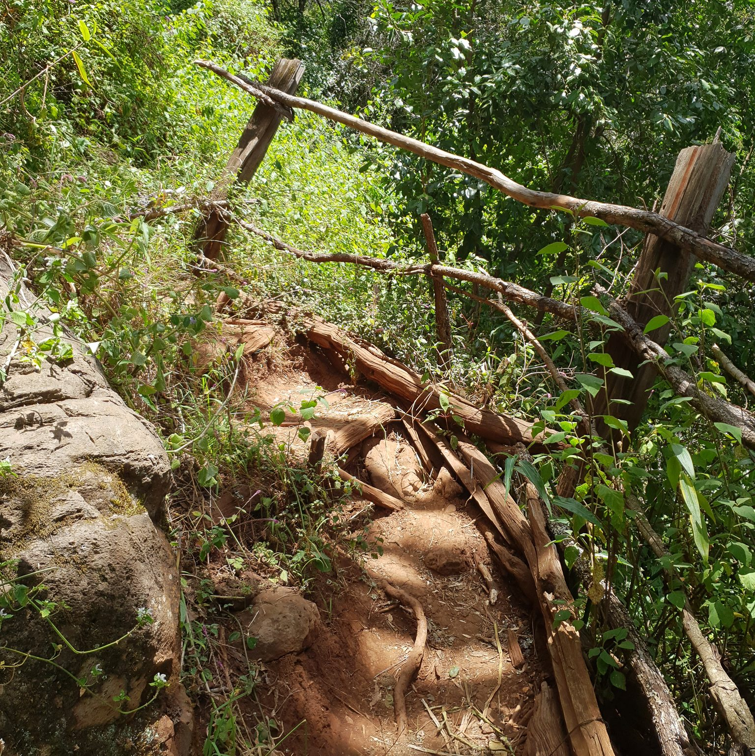 Ngare Ndare Forest trail