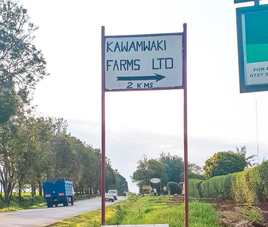 Kawamwaki Farm Tigoni