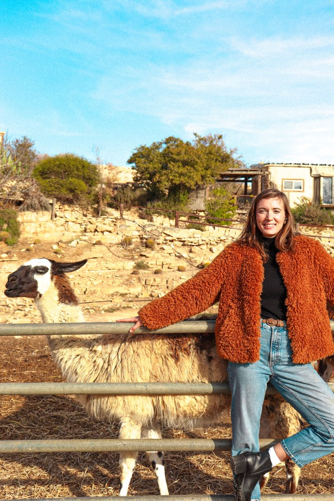 Alpacas and Llamas in the Ramon Crater