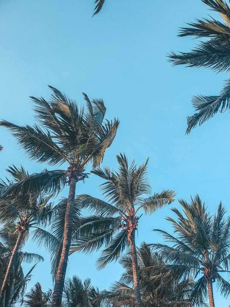Palm Trees Zanzibar