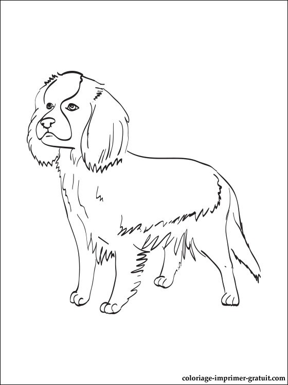 Coloriage Cavalier King Charles Spaniel A Imprimer