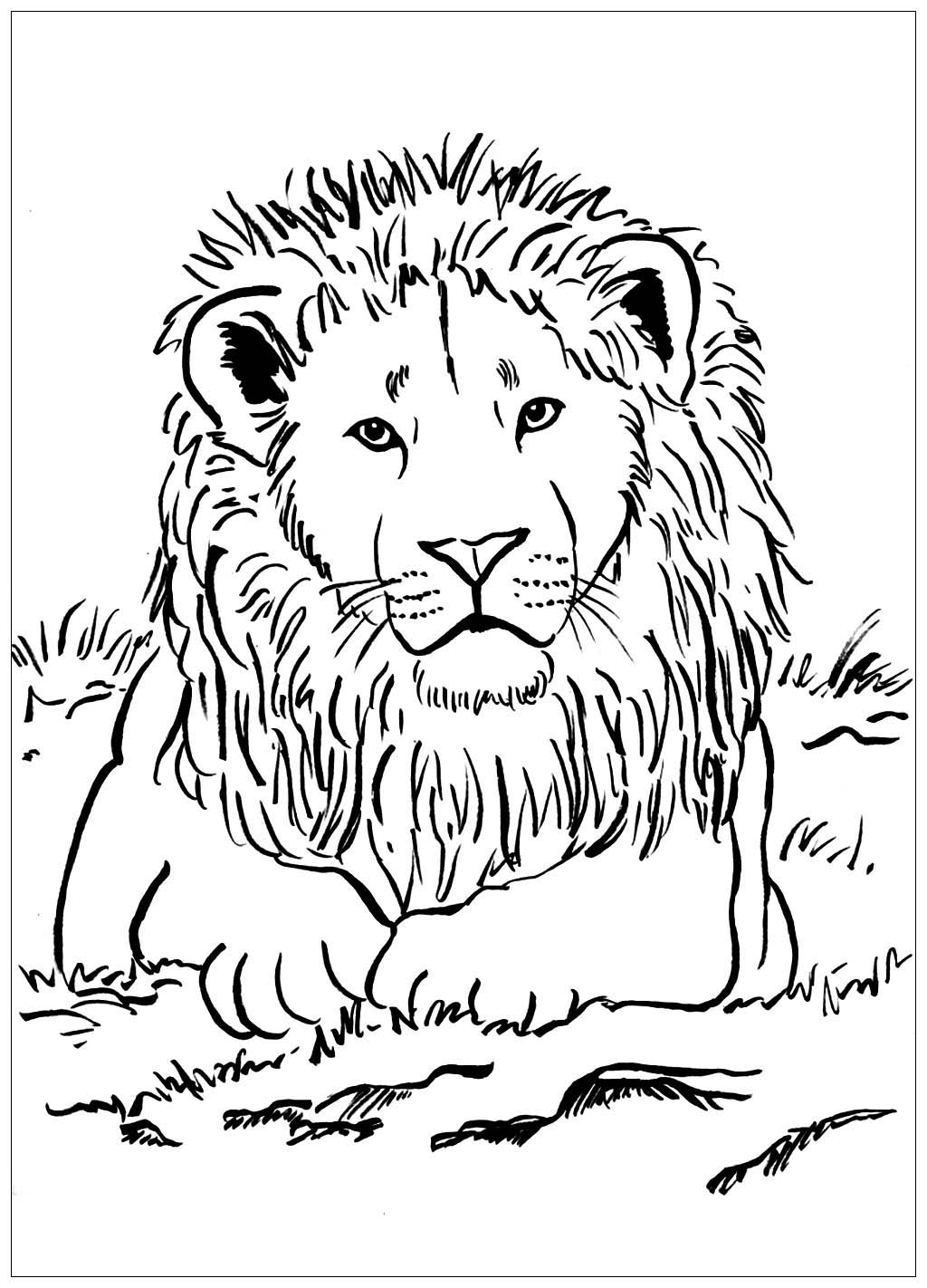 Color This Majestic Lion In The Savannah