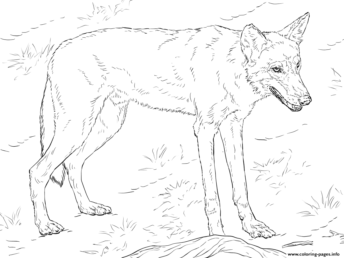 Red Wolf Coloring Pages Printable