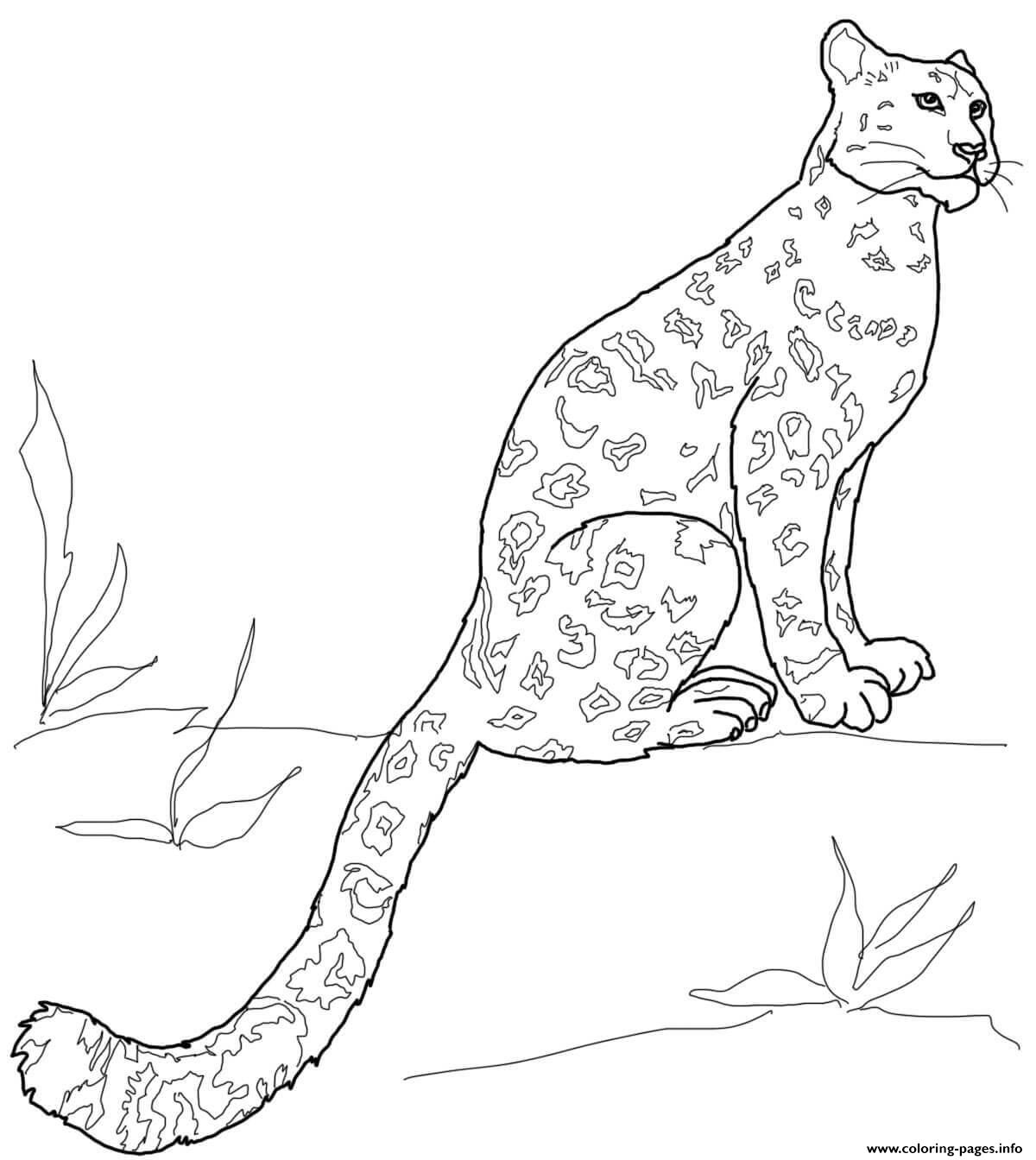Snow Leopard Sitting Coloring Pages Printable