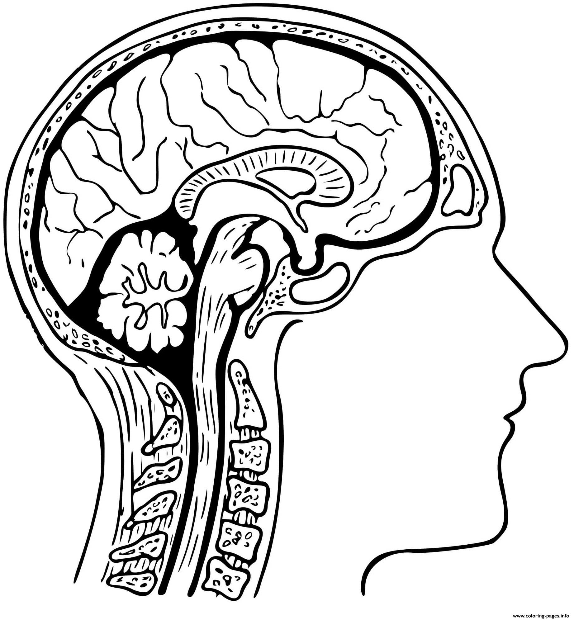 Human Brain Coloring Pages Printable