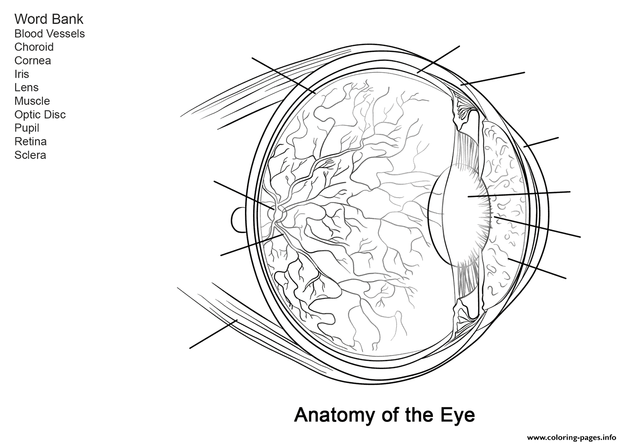 Human Eye Anatomy Worksheet Coloring Pages Printable