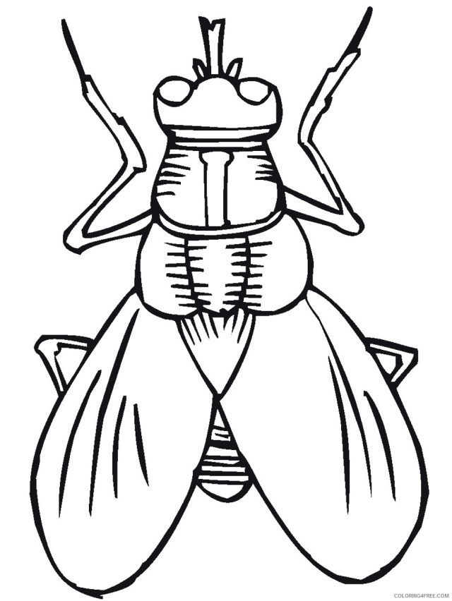 Black and White Bug Coloring Pages stink bug SGLIVX clipart