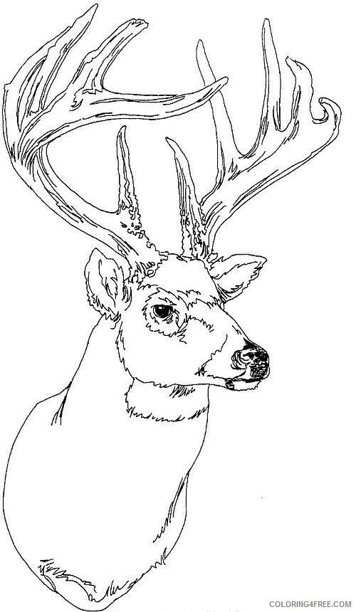 deer coloring pages buck deer coloring4free