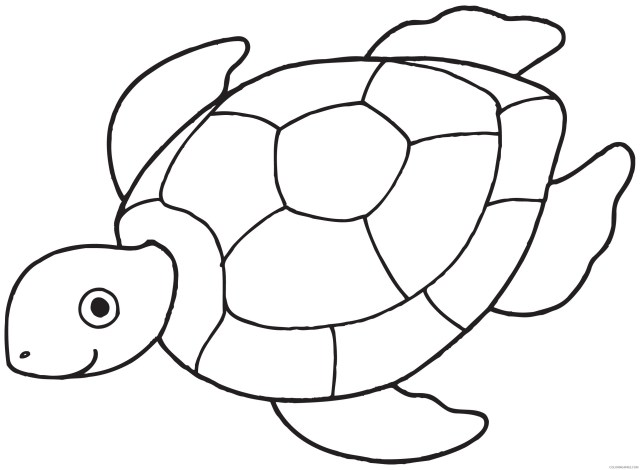 sea turtle coloring pages for preschooler Coloring20free