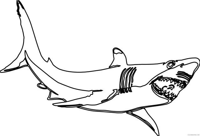 Hammerhead Shark Coloring Pages hammerhead shark black and